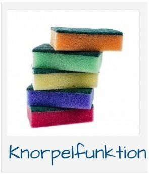 Knorpelfunktion
